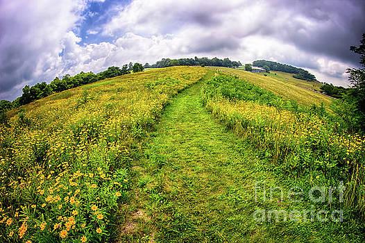 Dan Carmichael - Summer Hike Through Blue Ridge Flowers