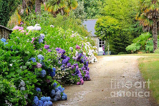 Summer Hydrangeas in Brittany France by Julia Willard