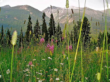 Summer in the Mountains by E Robert Dee
