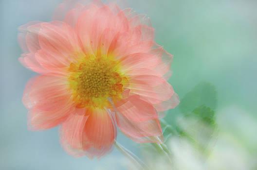 Jenny Rainbow - Summer Joy