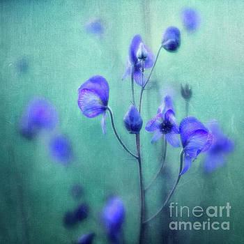 Summer Meadow by Priska Wettstein