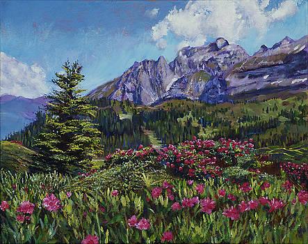 David Lloyd Glover - SUMMER MEADOW WILDFLOWERS