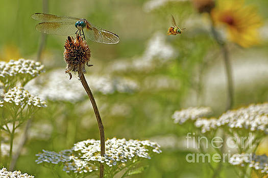 Summer Pollinators by Natural Focal Point Photography