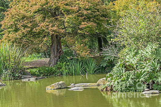 Summer Pond by Kate Brown