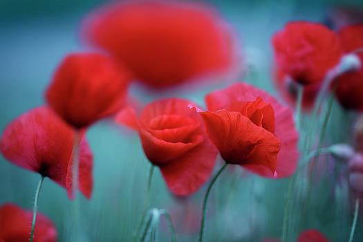 Summer Poppy Meadow 3 by Nailia Schwarz