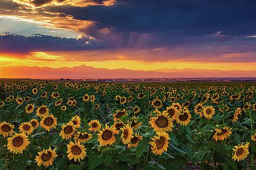 Summer Radiance by John De Bord