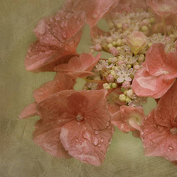 Summer rain by Claudia Moeckel