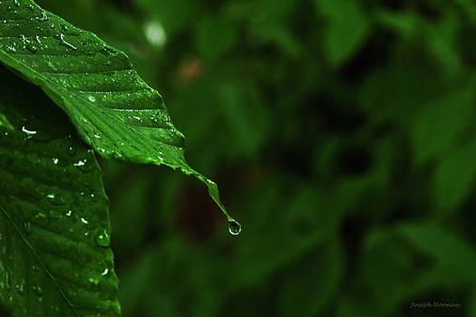 Summer Rain by Joseph Noonan