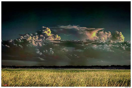 Summer Rain by Rogermike Wilson