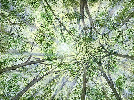 Summer Rays by Lynn Quinn
