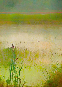 Summer Reeds by Catherine Alfidi