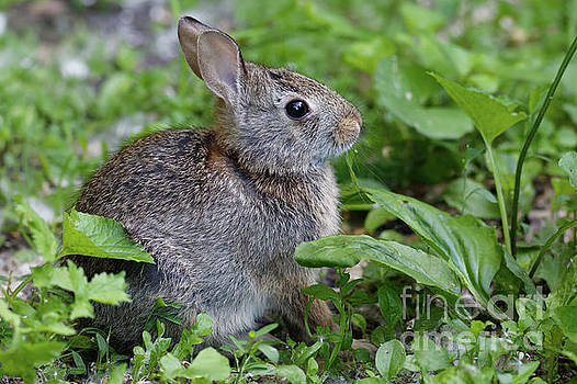 Summer Refuge Bunny by Natural Focal Point Photography