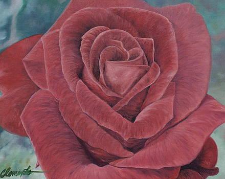 Summer Rose by Barbara Barber