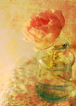 Summer Rose by Catherine Alfidi