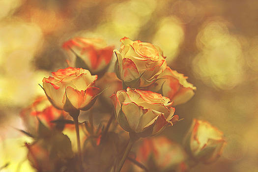 Summer Roses #1 by Pat Abbott
