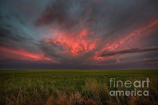 Summer Sky by Ian McGregor