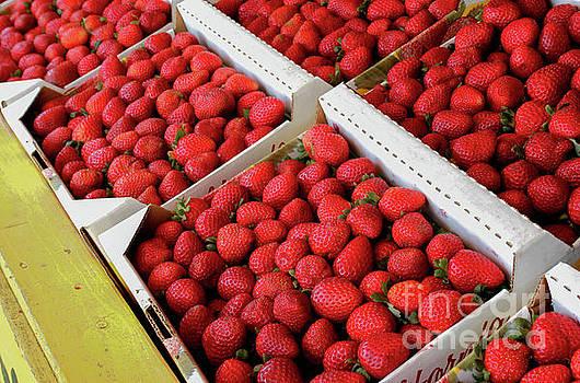 Summer Strawberries by Kip Krause