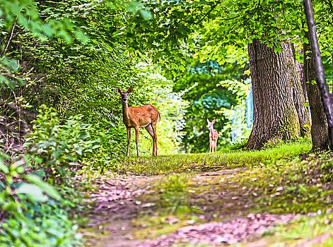 Summer Stroll by Anthony Baatz