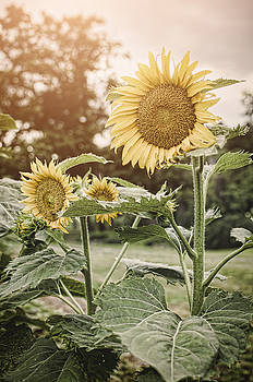 Heather Applegate - Summer Sun