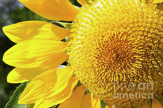 Summer Sunflower Painterly by Andee Design