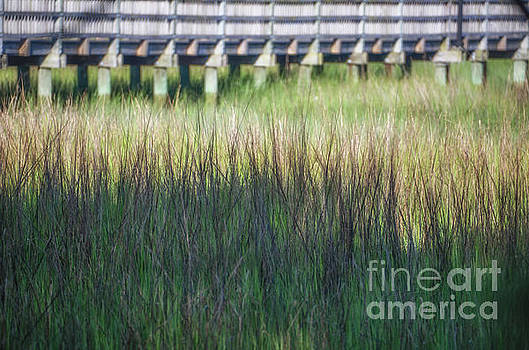 Summer Time Marsh Grass by Dale Powell
