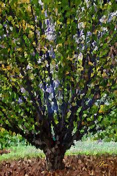Summer Tree by Joan Reese