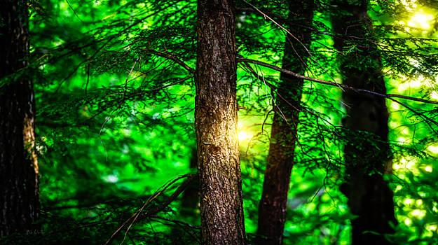 Summer Trees by Bob Orsillo