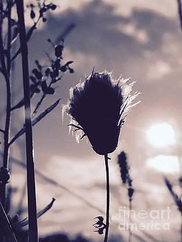Summer Weeds by Mioara Andritoiu