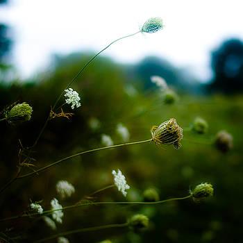 Summer Wildflowers 006 by Noah Weiner