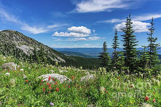 Summer Wildflowers on Big white by Dave Matchett