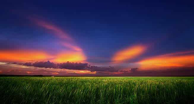 Summer Wind by Mark Andrew Thomas