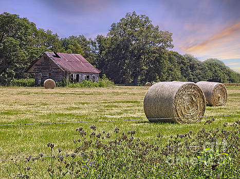 Summers Golden Harvest by Ella Kaye Dickey