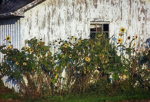 Summers Last Hurrah by Stephanie Calhoun