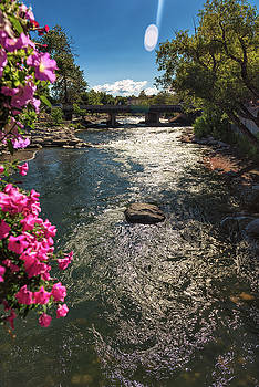 Summertime at the Truckee River in Downtown Reno, NV on a Sunny Afternoon with Magenta Flowers by Brian Ball