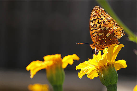 Summertime Butterfly by Bob See