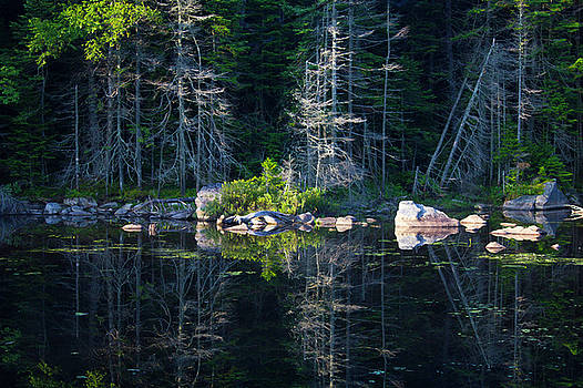 Summertime reflections on the lake by Jessica Tabora