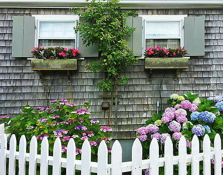 Michelle Wiarda - Summery Nantucket