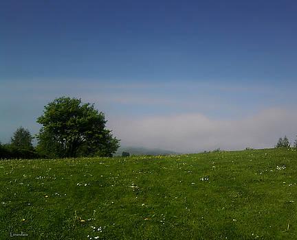 Sun and Fog by Alexandra Cook