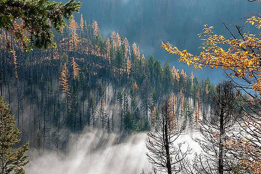 Sun and Mist by David Emond