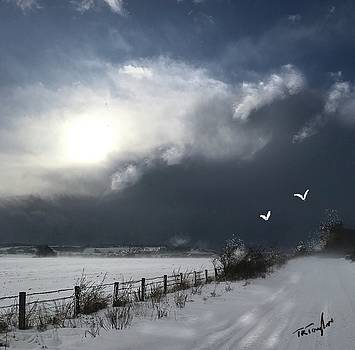 Sun and Snow by Ralph Taylor