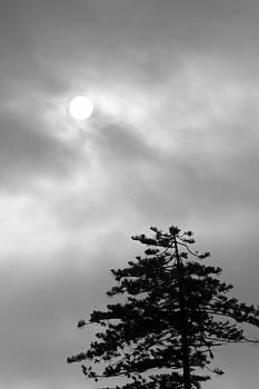 Balanced Art - Sun and Tree
