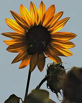 Sun Art by Philip A Swiderski Jr