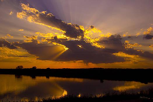Sun Beams by Andrea Lawrence