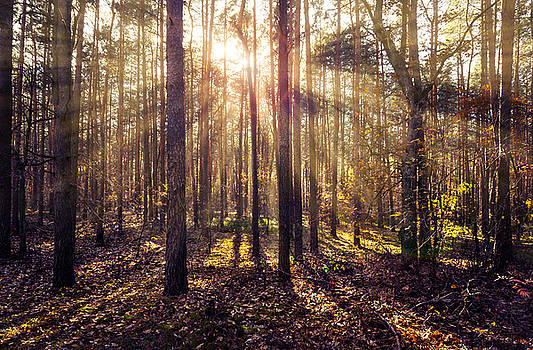 Sun beams in the autumn forest by Dmytro Korol