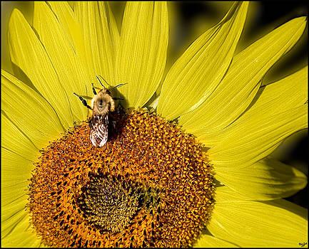 Chris Lord - Sun Bee