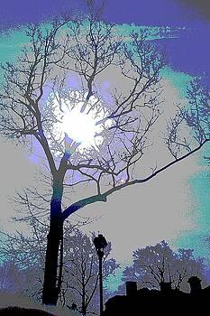 Sun Behind the Tree by Deborah Rosier