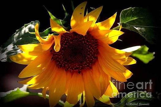 Sun Dancer by Rabiah Seminole