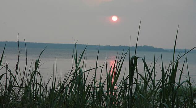 Sun Drop by Althea Sumpter