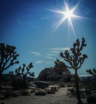Sun Flare at Joshua Tree by Elaine Webster