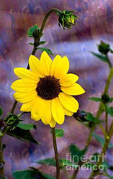 Sun Flower by Bill Baer